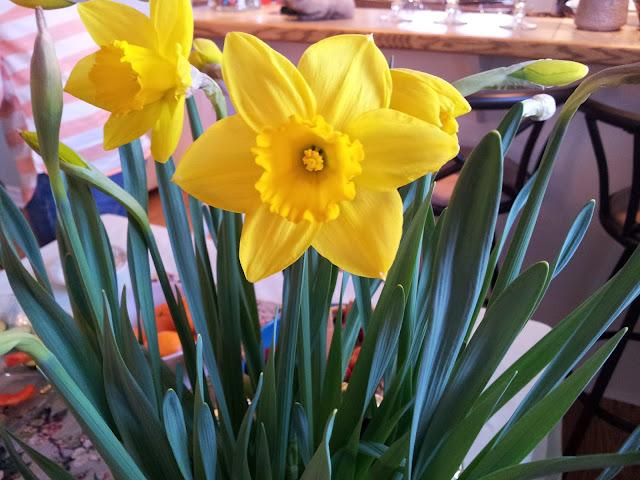 Cheerful Daffodils