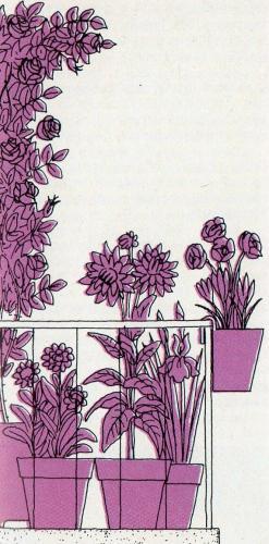 Piante e fiori il balcone tutto viola fiori per chi ama for Tutto per il balcone