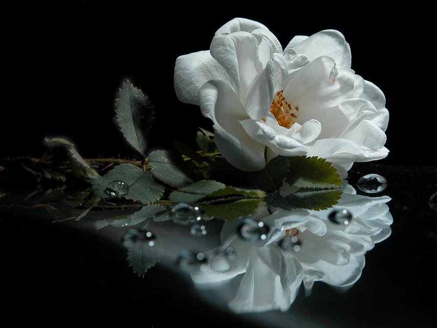 Uma Flor De Bom Dia: Quando O Homem Ama Uma Mulher: Bom Dia Linda Flor
