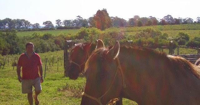 Ecuestre caballo o pony rosa heno heno Alimentador de esquina bar Nuevo * haybar