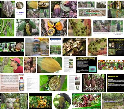http://www.supernasagranule.com/2018/05/8-jenis-hama-penyakit-buah-kakao.html