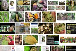 8 Jenis Hama Penyakit Buah Kakao