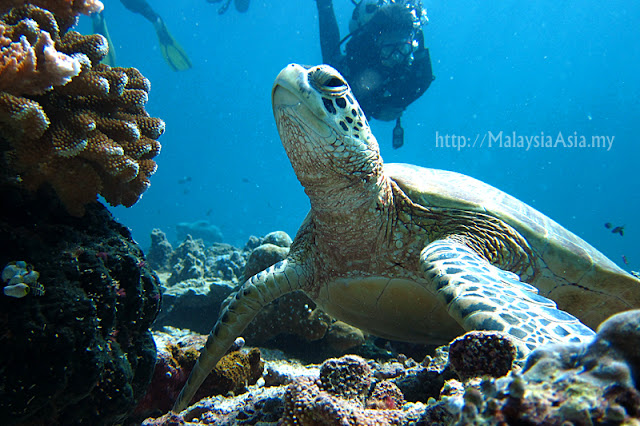 Diving photos of Sipadan Island