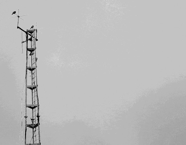 Fire station communication tower with two pigeons on top - cropped and adjusted for effect.