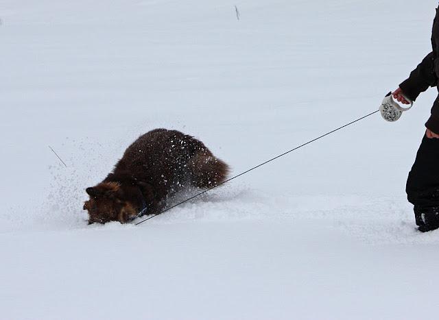 hvorfor gnir hunder seg mot bakken