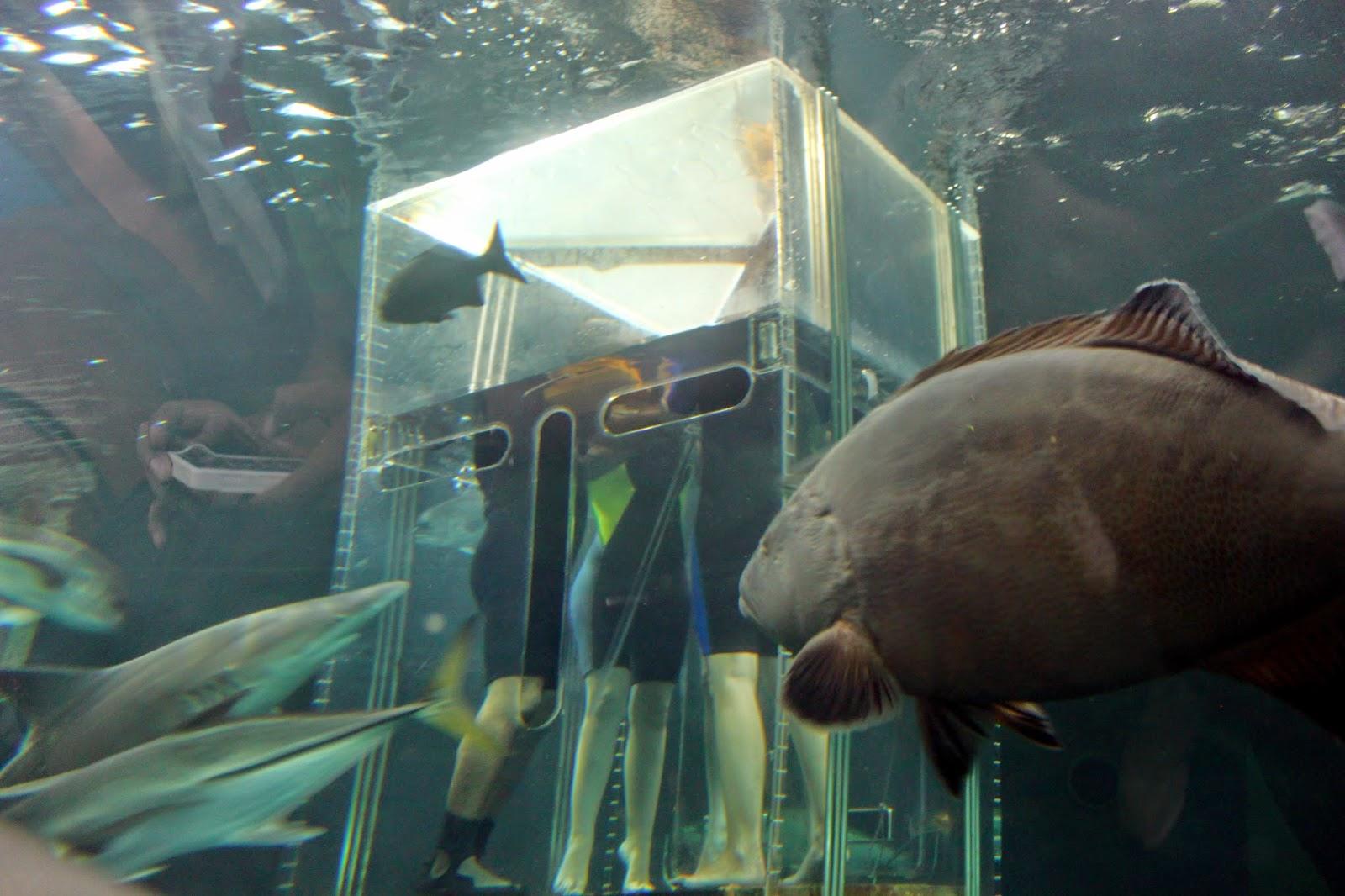 personas en el tiburonario