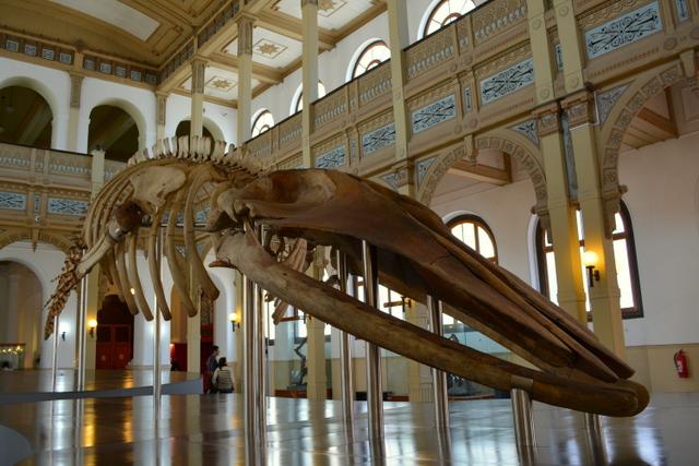 Museu Nacional de História Natural em Santiago