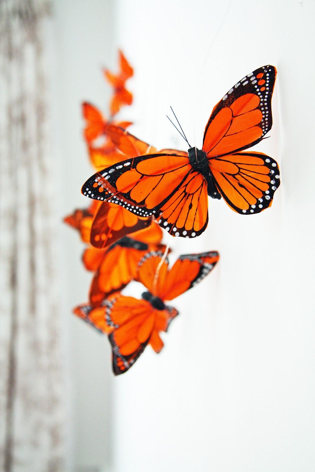 In the Fields : Butterfly Dreams