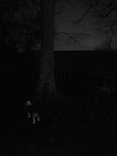 Low light, black and white image of a dog, tree, and barn, taken by the Huawei P20 Pro rear camera