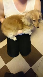 como segurar seu cão