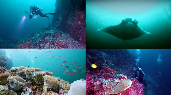 Diving in Perak Island