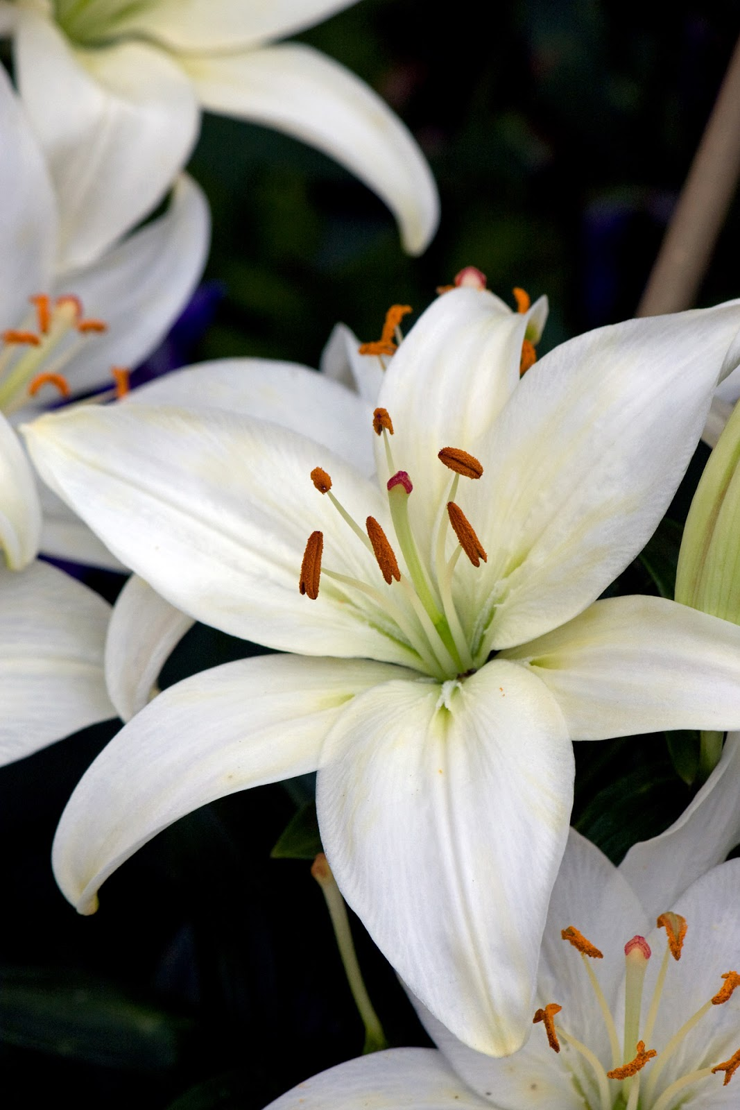 Creative Ideas: Lilies...
