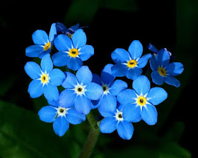 Forget Me Not Alzheimer's Reading Room