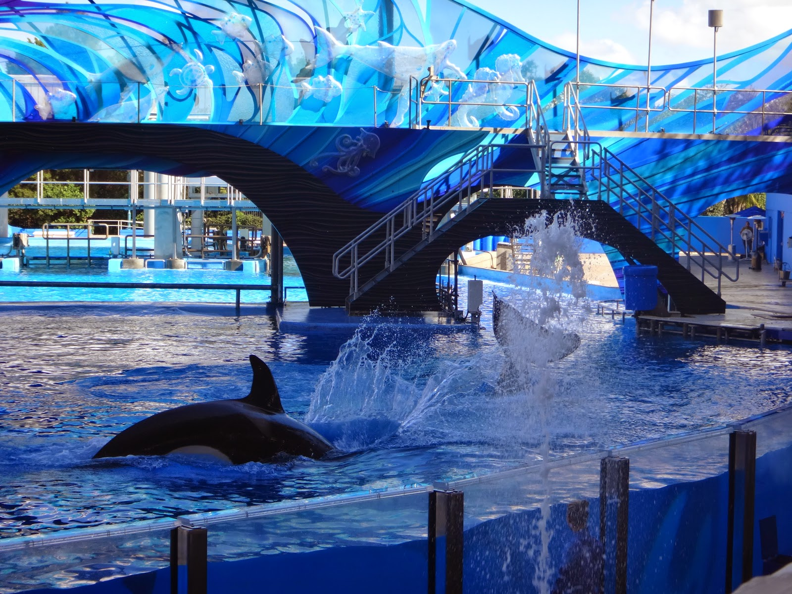 shamu adventure - Parque sea world - orlando, florida