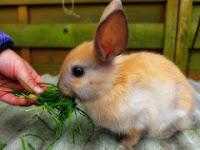 Jenis Pakan Kelinci Agar  Dapat Tumbuh Sehat