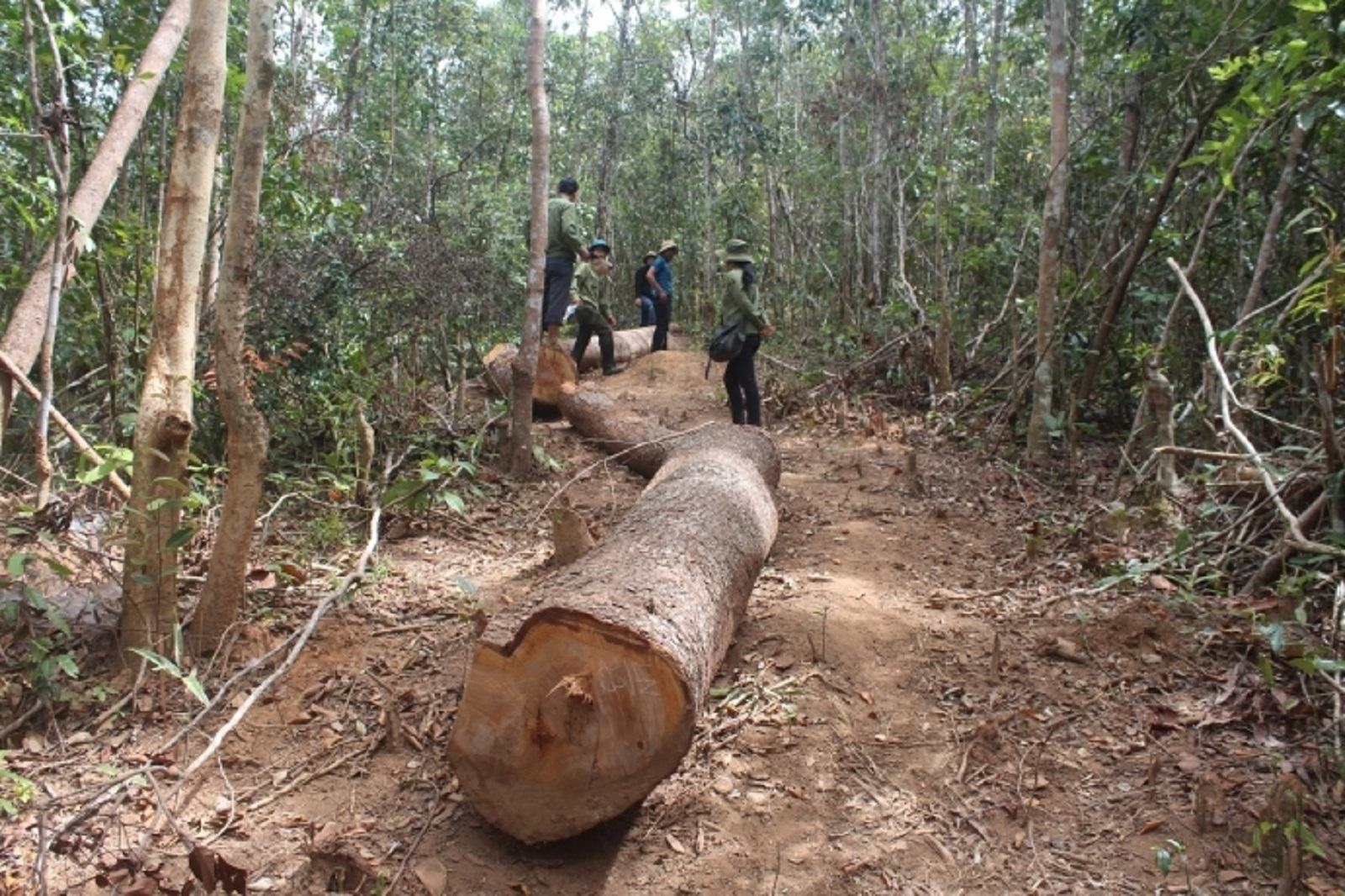 Gia Lai: Bảo vệ rừng bịa chuyện bị 20 lâm tặc tấn công, cướp gỗ