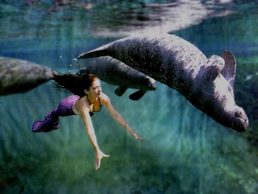 West Indian Manatee - Life of Sea