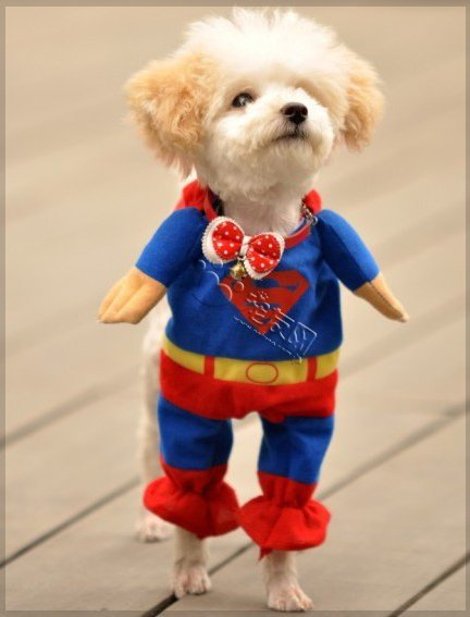 Cute and Pet Animals: funny dogs in costumes - Google Search