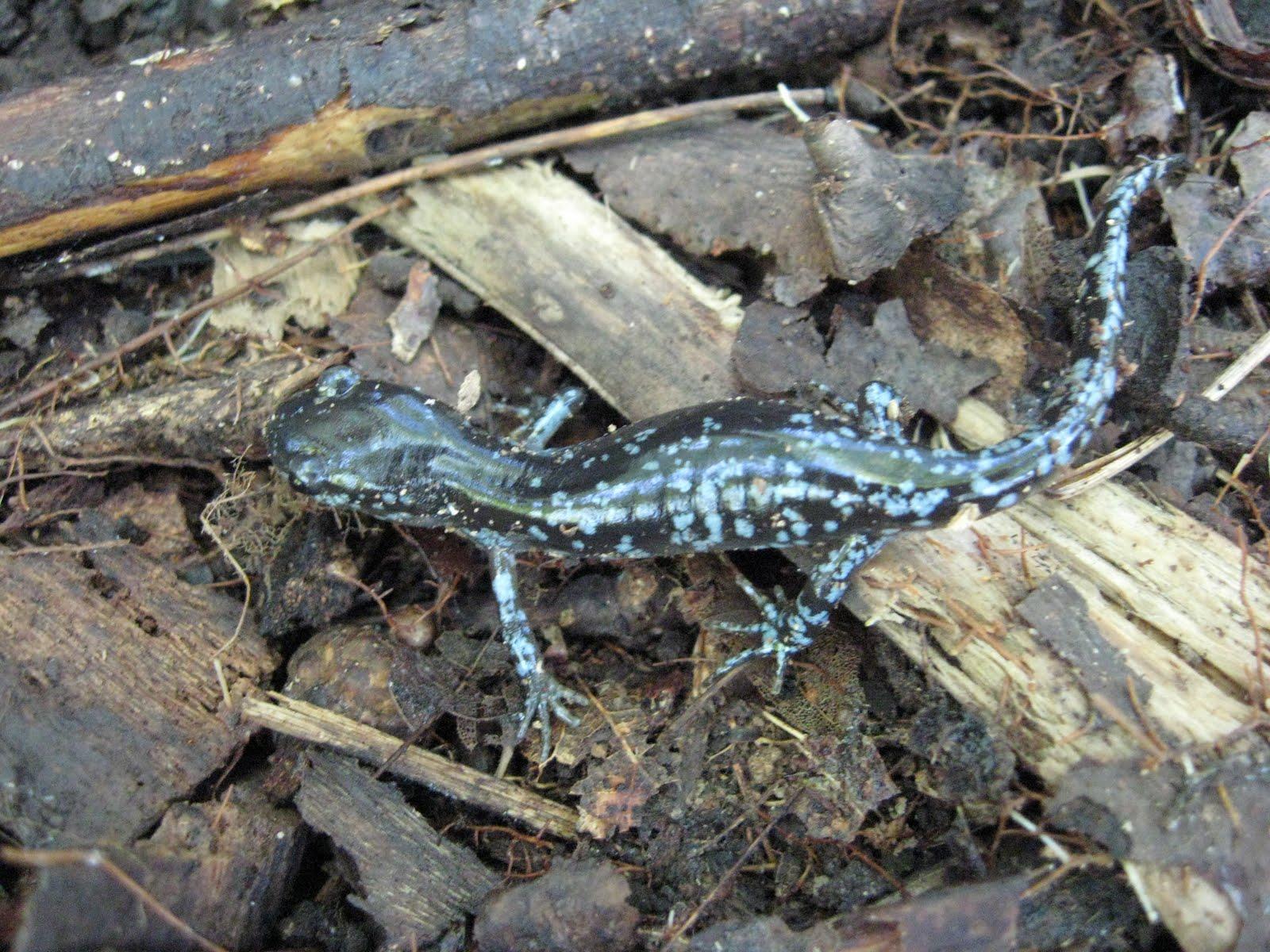 Wildlife Monitor April