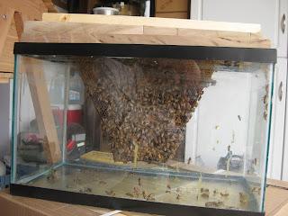 Dewey S Bee Blog School Presentation Observation Hive