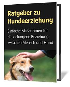 http://ratgeber-katalog.blogspot.de/2018/01/ratgeber-zu-hundeerziehung.html