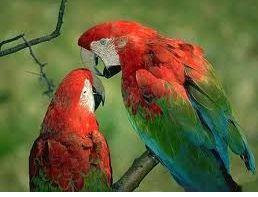 Cerita Burung Nuri