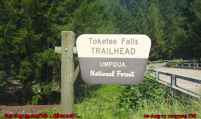 Toketee Falls Trail head Oregon