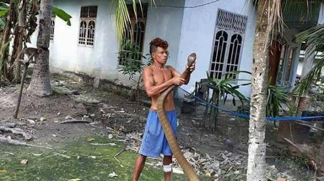 VIDEO: Pria Ini Jinakkan King Kobra Sepanjang 3 Meter, Aksinya Bikin Geger!