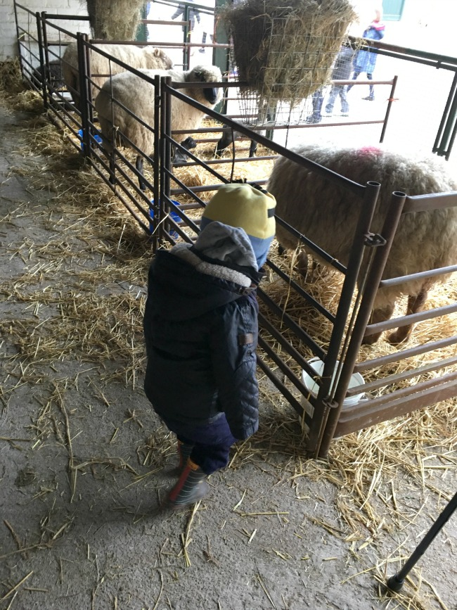 Our-Weekly-Journal-20-March-toddler-looking-at-baby-lambs