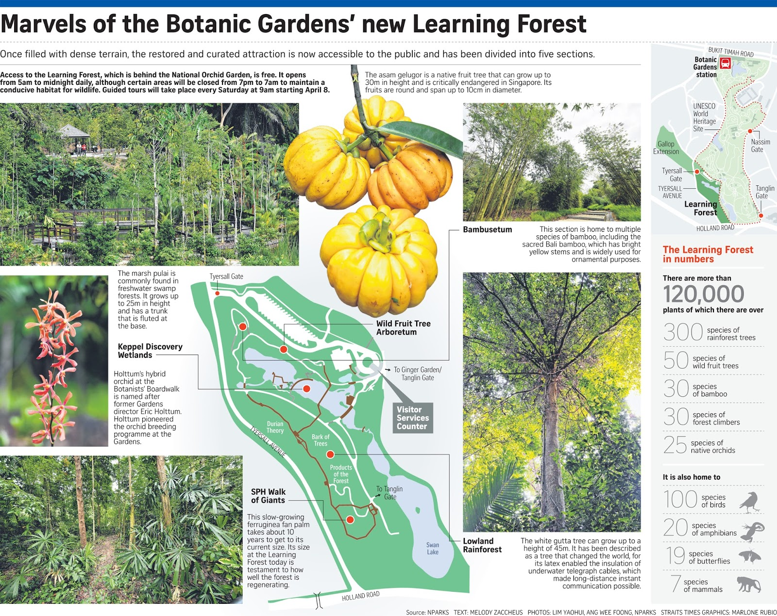 For More Than 100 Years, A Wild Swampy Forest With Towering Trees Grew  Right Next To The Botanic Gardens. Few Ventured Into The Dense Marsh.
