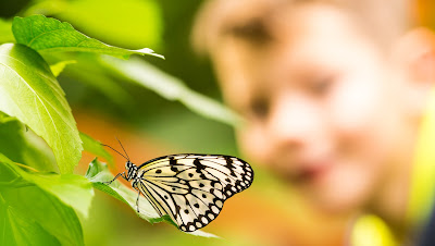 Falter im Schmetterlingshaus EGA Erfurt by Fotograf Michael Schalansky