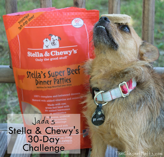 Jada's Stella & Chewy's 30-Day Challenge