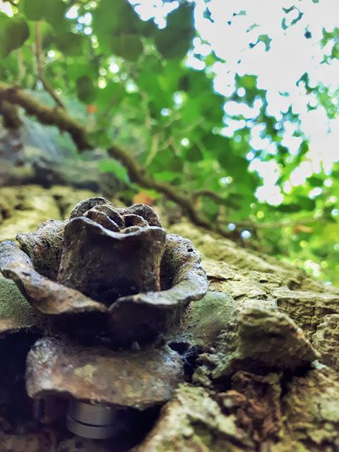 metal rose part of an elaborate geocaching game at Nationalpark Eifel