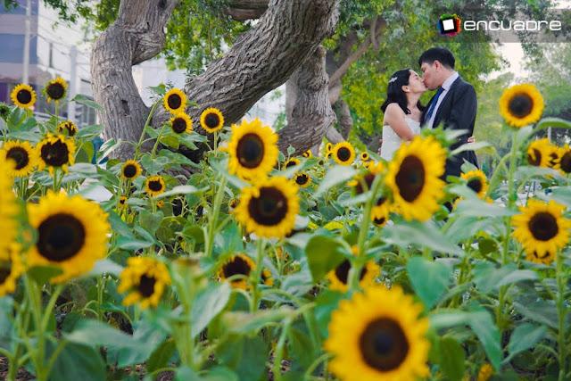fotos amor enamorados girasoles