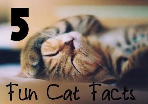 5 Fun Cat Facts