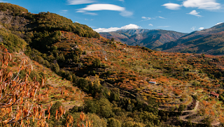 Valle del Jerte, un paisaje cultivado. Panorámica otoñal.