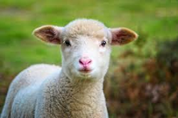 WHAT COUNTRY PRODUCES THE MOST LAMB?