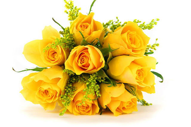 Hình ảnh đẹp hoa hồng vàng