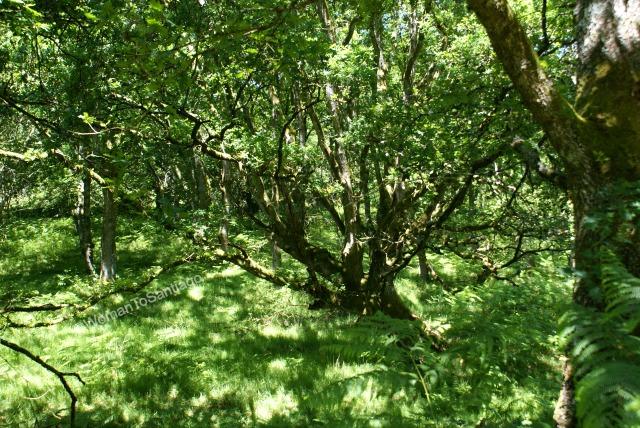fervenza-casa-rural-bosque-lugo-galicia-womantosantiago