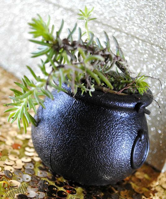 Succulents in cauldron's