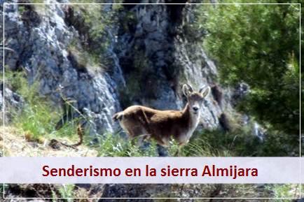 Podra practicar senderismo en contacto con la naturaleza en la Sierra Almijara
