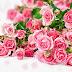 Herbal Bunga Mawar untuk Stroke