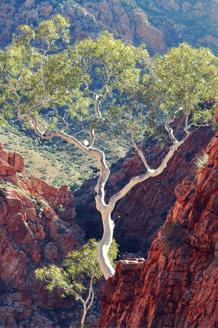 Árvores | Trees