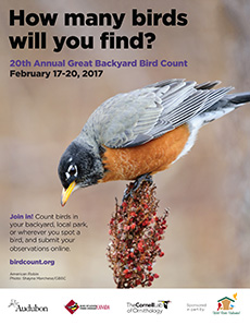 Great Backyard Bird Count 2017