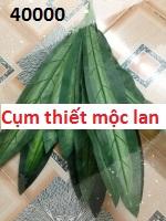 Phu kiên hoa pha le tai Quan Hoa