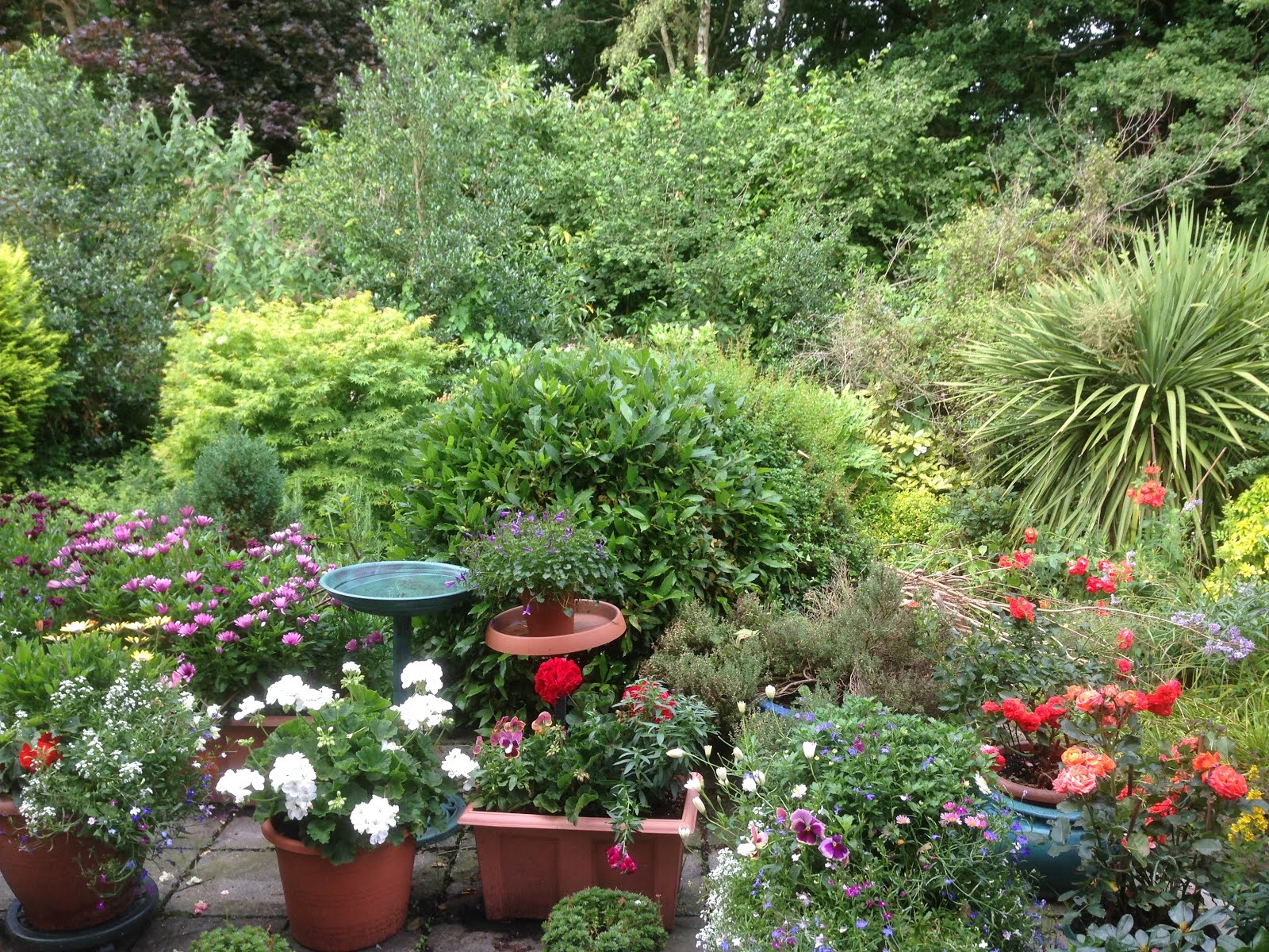 Summer view of the garden