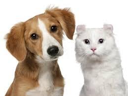 Interacciones entre perros y gatos, algo realmente de cuidado
