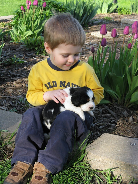 William holding an English Springer Spaniel puppy