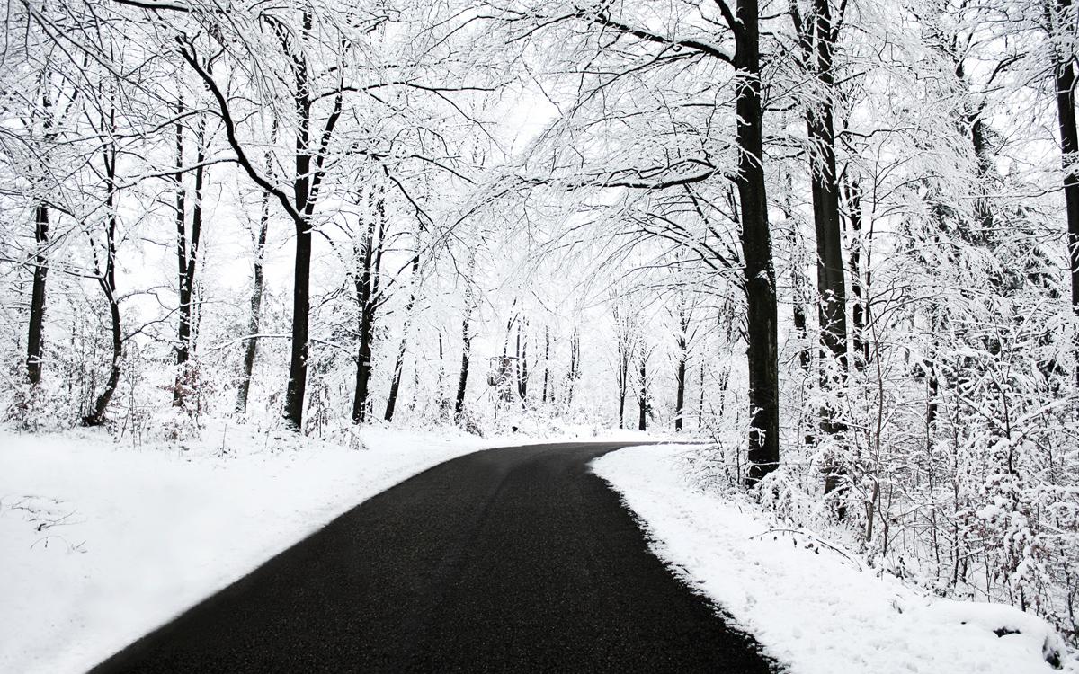 Free Wallpapers: Winter Wallpaper