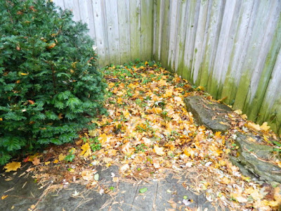 Toronto Bedford Park Garden Fall Cleanup before by Paul Jung Gardening Services